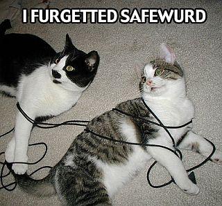 cats in bondage