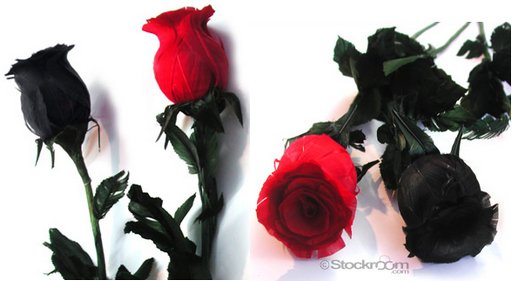 red and black feather tickler roses from The Stockroom